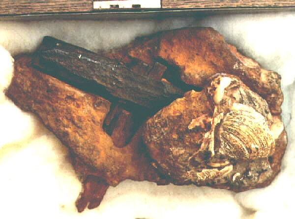 Shown here is an alleged hammer that is hundreds of millions of years old.